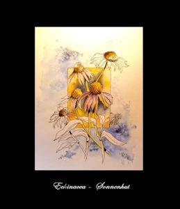2020 Nr. 338 Echinacea – Sonnenhut