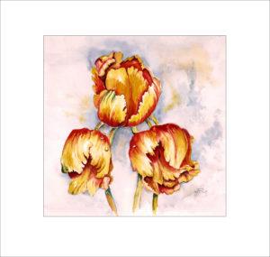 französische Tulpen (2) (Nr 36)