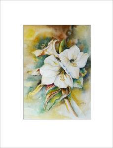 weiße Amarylis (Nr. 37)
