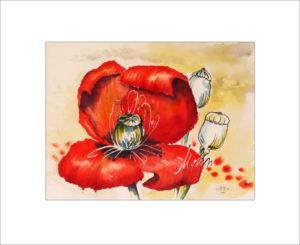 Mohnblüte – 40 x50 cm (Nr. 115)