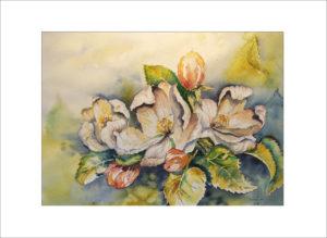 Apfelblüten – 40 x 50 cm (Nr. 278)